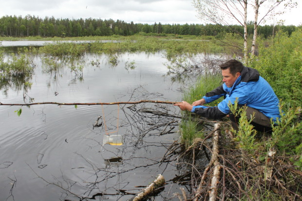 Aquatic macroinvertebrate activity trapping, Lampsisuo Kajaani Finland 6b, LIFE Return of Rural Wetlands, photo Juha Siekkinen 16.6.2014