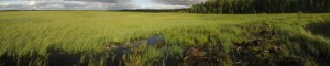 Vanhanmaja wetland Finland, western site before wetland creation, photo Juha Siekkinen 28.6.2012