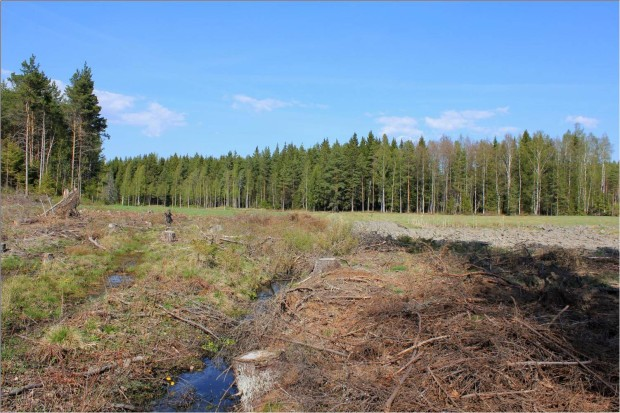 Härmälä wetland site was built in to a former wet meadow that has been drained for forestry and agricultural purposes during the last century. The drainage was never really successful and the waterlogged area wasn't good for growing crops and it was used for hay production or left fallow in the rainy years. The landowner contacted the project as he was willing to restore the unproductive area to provide more than 2 hectares of quality wetland habitat for wildlife. Picture: Timo Niemelä