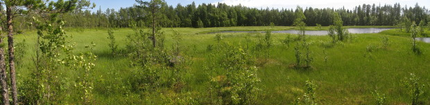 Iso Kivijärvi wetland, eastern area before restoration, photo Juha Siekkinen 3.7.2012